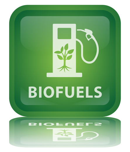 research paper on biofuels Biofuels: producing ethanol from cellulosic material  one of the most widely used biofuels is ethanol  to compare their ability of producing ethanol from.